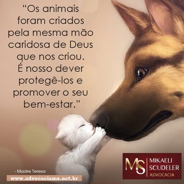 proteção animais
